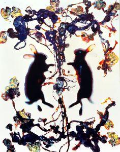 Adam Fuss, Love (Silver dye bleach Cibachrome,1992)