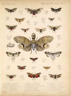 moths - transformation , painful change/growth, butterfly effect
