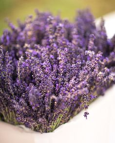 Lavenders give a great parfum to you ceremony ;) #provence #canon #weddingprovence #pinit