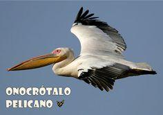 Zarampagalegando: Dicionario visual. Pelicano