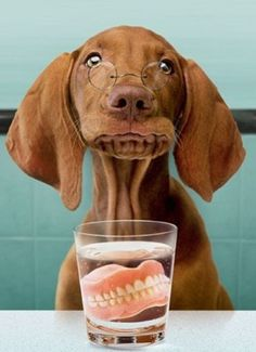 Seriously Funny Cards by Avanti Funny Animal Pictures, Funny Animals, Cute Animals, Love My Dog, Puppy Love, Funny Dogs, Cute Dogs, Vizsla Funny, Dental Humor