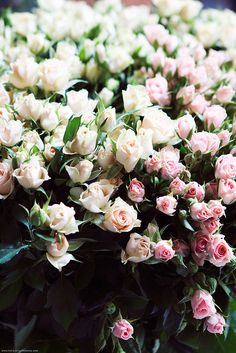 Pastel pink roses by Carin Olsson Flickr