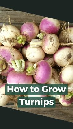 How To Grow Turnips (Gardening Guide) Home Grown Vegetables, Types Of Vegetables, Different Vegetables, Planting Vegetables, Planting Seeds, Growing Vegetables, Vegetable Garden, Gardening For Beginners, Gardening Tips
