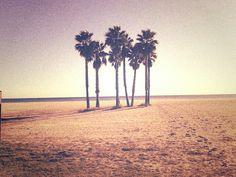 El mar y sus palmeras en la arena.