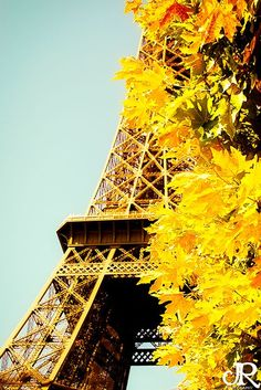 fall leaves and the Eiffel