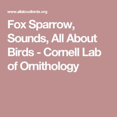 Fox Sparrow, Sounds, All About Birds - Cornell Lab of Ornithology