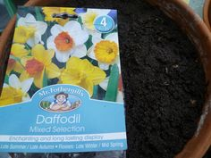 Plant Bulbs in Autumn - Daffodils