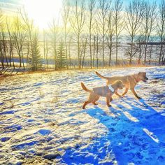Adventures and sunsets are better with your BFF  #fureverfriends #friendsfurevercontest entry hosted by @oli_the_aussie_ @thegoldenfinn @worldofbeau  Also an entry for the #celebratetheseasonscontest hosted by @arya_the_aussie @reanahsreflections @pupsonpar We lve winter!  #puppiesofinstagram #puppiesforall #dogs #dogsofinstagram #goldendoodles #goldendoodlesofinstagram #goldendoodlesofinsta #goldendoodlesofig #goldendoodlepuppy #goldendoodlecentral  #doodletales #goldendoodleselfie…