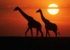 Africa is a must. Going on a photography safari is a dream...that *will come true!