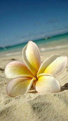 Flor en la playa