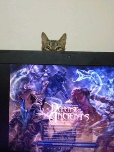 Cats and Geeks