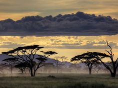 A feeling of mystery and peace are evoked in this landscape photograph.  The silhouettes of the trees stand dramatically against the fog and the sky.  I feel it.  I smell it.  This is:  Serengeti, Tanzania.  And this is my top pin on my board:  LANDSCAPE