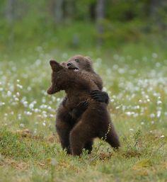 Free Bear Wrestling
