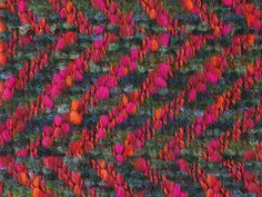 VENICE MOHAIR TWEED SAMPLE, 1965. Double cloth herringbone fabric, woven in brushed space-dyed mohair, multiply wool and multiply wool slub yarns, and polyester and wool yarns, in light and dark green, orange, light and dark blue, red and pink.