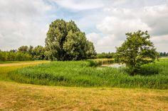 Lingotto zet eerste stap in Utrecht met aankoop voormalig bedrijfscomplex Bol.com  Campus Werkspoor BV, een consortium bestaande uit…