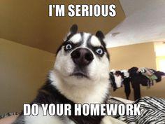 do your homework | SERIOUS, DO YOUR HOMEWORK | Serious Dog | Troll Meme Generator
