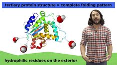 Protein Structure Professor Dave Explains protein structure in this helpful biochemistry video. He talks about dehydration synthesis, the protein structure hierarchy and gives examples of where we see these protein folding patterns in the body.