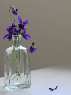 My birth month flower............Violets