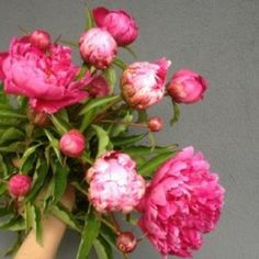 Pfingstrosen © Vom Hügel Green Wedding Magazine Blog Wedding Magazine, Flower Farm, Green Wedding, Flower Power, Floral Wreath, Wreaths, Flowers, Blog, Pentecost