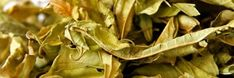 ハーブを濃縮!便利なハーブチンキの作り方と使い方 | ピントル Beauty Advice, Herbs, Herb, Medicinal Plants