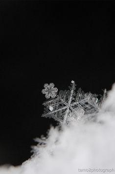雪の結晶(ID:2409692)拡大ページ - 写真共有サイト:PHOTOHITO