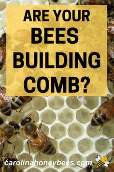 Honey Bee Hives, Honey Bees, Raw Honey, How To Start Beekeeping, Bee Facts, Honey Benefits, Backyard Beekeeping, Bee Happy, Save The Bees
