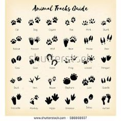Find Animal Tracks Foot Print Guide Vector stock images in HD and millions of other royalty-free stock photos, illustrations and vectors in the Shutterstock collection. Thousands of new, high-quality pictures added every day. Dog Tattoos, Animal Tattoos, Body Art Tattoos, I Tattoo, Small Tattoos, Deer Track Tattoo, Paw Print Tattoos, Skunk Tattoo, Cat Paw Print Tattoo