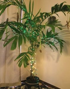 1000+ images about Lit up plants and flowers on Pinterest Led string lights, LED and Lighted ...