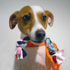DIY upcycled t-shirt dog tug toy by iamthemandy.com