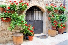 Red flowers on medieval stone wall, Italy