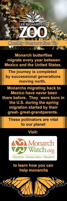 Scientist still wonder how monarchs make such large migrations; especially since the individuals traveling in the fall have never traveled this route before.  How do they know where to go?  What is guiding them?  You can help answer these questions by gathering data on monarch migration paths through Kansas and provide your data to Monarch Watch.    To learn more about how you can contribute to monarch research visit http://www.monarchwatch.org/index.html