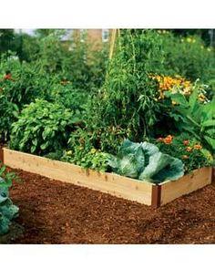 Vegetable beds!