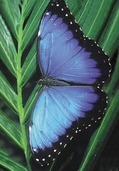 Just when the caterpillar thought the world was over, it turned into a butterfly