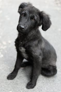 Perrito cachorro callejero by Balamha, via Flickr