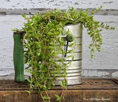 The Old Blue Bucket: Thinking Outside The Pot ~ Unique planters
