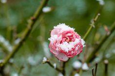 Winter http://fotogr
