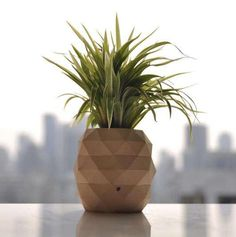 Replace this pineapple for a bowl or glass! DIY Pineapple Plant Holders - These DIY Plant Holders are Geometrically Shaped Like Tropical Fruits Pineapple Planting, Pineapple Vase, Diy Arts And Crafts, Diy Crafts, Pots, Bohemian Interior, Tropical Fruits, Plant Holders, Beach House Decor