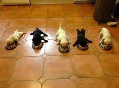 Supper!