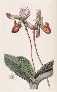 v. 28 (1842) - Edwards's botanical register. - Biodiversity Heritage Library