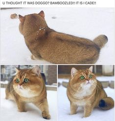 Simple Yet, Funny Animal Memes - World's largest collection of cat memes and other animals Cute Little Animals, Cute Funny Animals, Funny Cute, Cute Cats, Adorable Kittens, Crazy Funny, Hilarious, Funny Animal Memes, Funny Animal Pictures