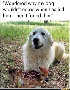 The best dog memes of 2019 by Small Animals. Enjoy the funny dogs meme. Cute Animal Memes, Animal Jokes, Cute Animal Pictures, Cute Funny Animals, Funny Dog Memes, Funny Dogs, Cat Dog, Cute Dogs And Puppies, Doggies