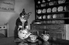 Oh, hello. Would you like a cup too? This is stupid funny