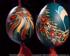 Ukrainian Easter Egg Pysanky PYS12033  from the Lviv Region on AllThingsUkrainian.com