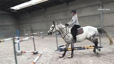 horseygifs: rider: heels-down  throwback to trying bon bon:)