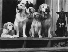 Bruce Weber's Dogs! A Canine Portfolio | One of these things is not like the other.