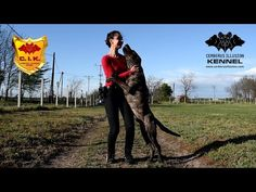 Trick Dog Class 11 - Reward your dog - Novice Trick Dog Training with Cimarron Uruguayo dogs from Cerberus Illusion kennel