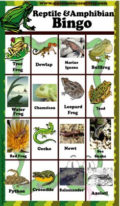 FROG BINGO GAMES  | Reptile and Amphibian Bingo Game