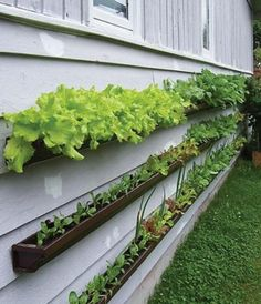 Use gutters to create a space saving vegetable garden. I really like this idea and it can be on my porch and I won't have to worry about the deer eating my garden!