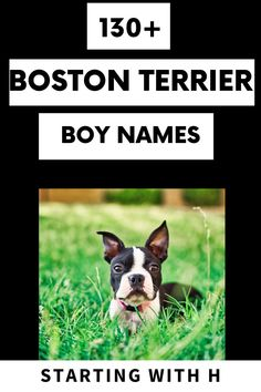 Are you thinking about getting a little baby boy? Or has your baby boy arrived and you're scrambling for the perfect name? No worries! We have come up with the perfect list of names all starting with the letter H! #bostonterriersociety #bostonterrier #bostondogs #dognames #doglove Kitten Names, Cat Names, Funny Boy Names, Great Dog Names, Baby Boston Terriers, Mighty Mighty, The Perfect Dog, Girl And Dog, Dogs Of The World