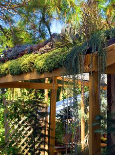 Succulent green roof. This is possible in a dry climate with a little shade so they don't burn/fry.